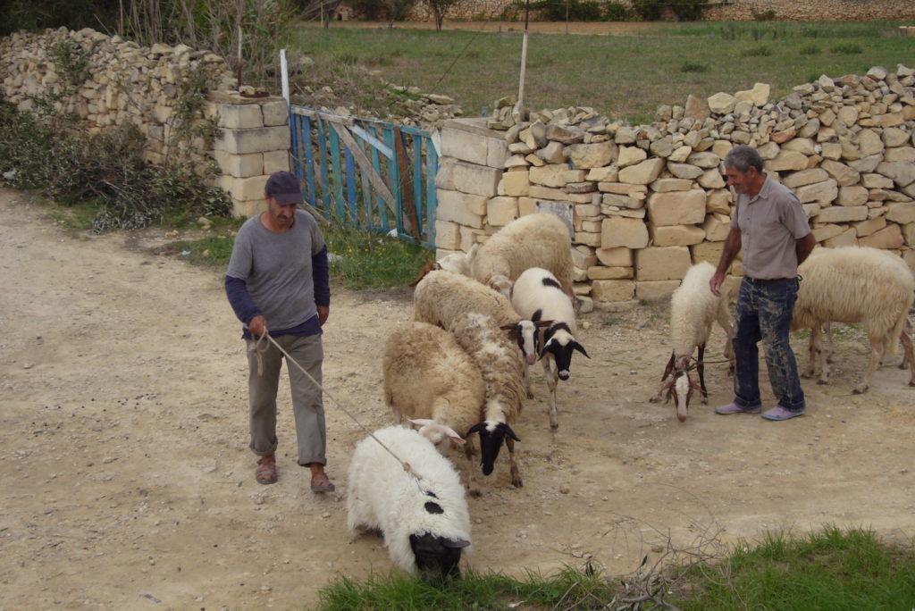 Le Cochon de Gaza ©Marilyn